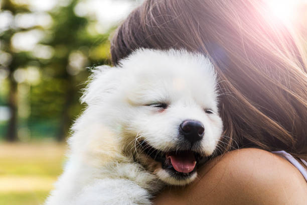 attractive young woman bonding with her dog outdoors - pet owner stock pictures, royalty-free photos & images