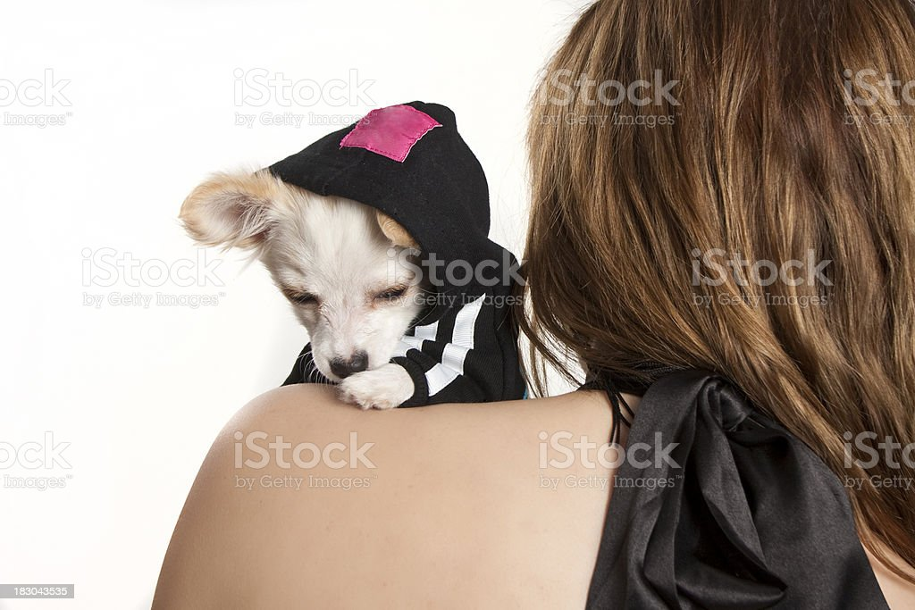 Attractive young woman holding a chihuahua royalty-free stock photo