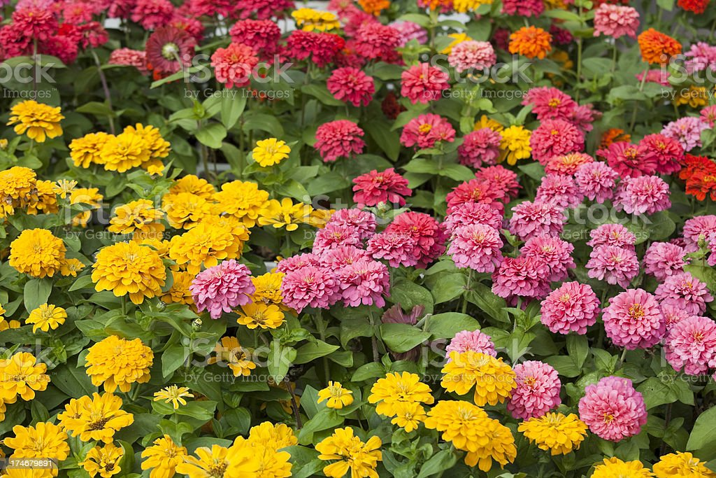 Atwater Farmers Market Outdoor Flower Garden Center, Montreal Canada royalty-free stock photo