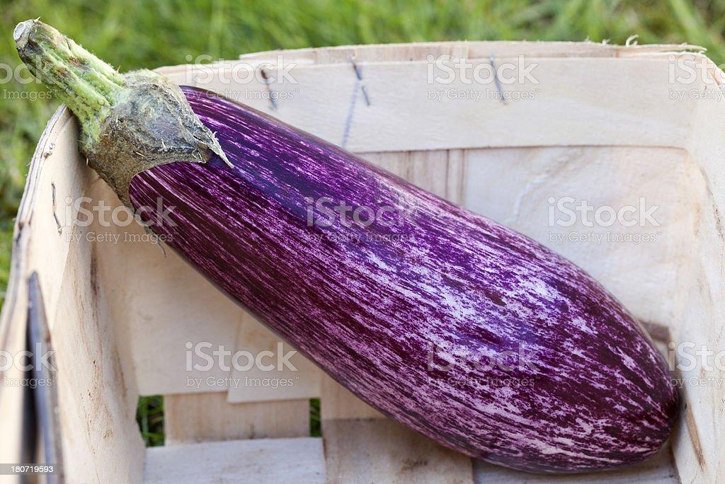 Aubergine or Egg Plant royalty-free stock photo