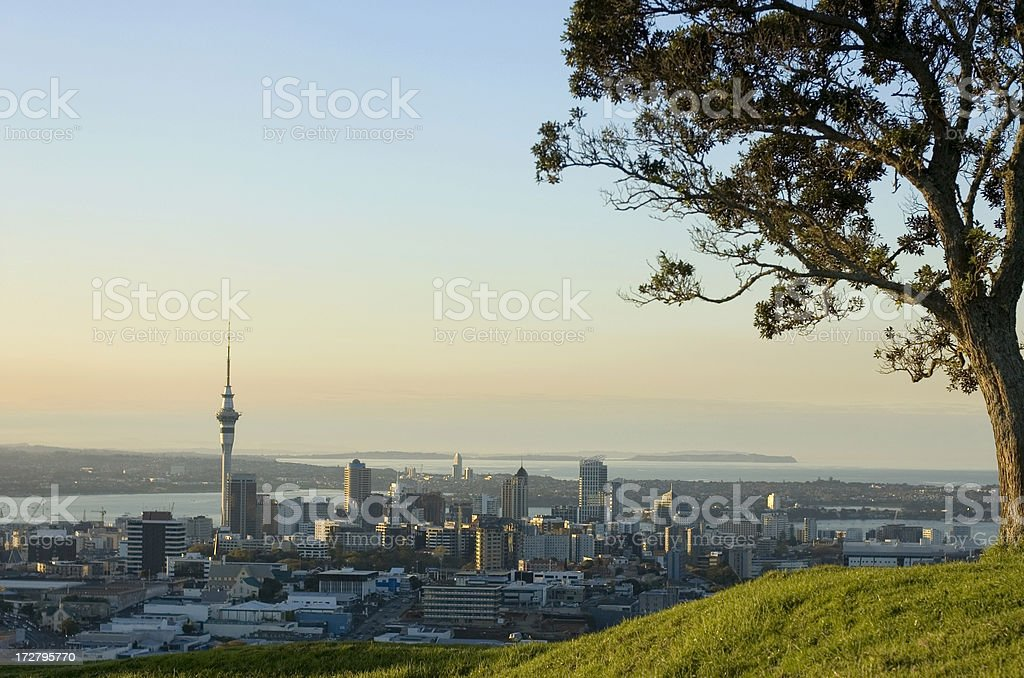 Auckland CBD and Tree royalty-free stock photo