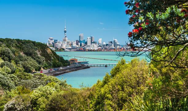 Auckland through Pohutukawa tree. stock photo