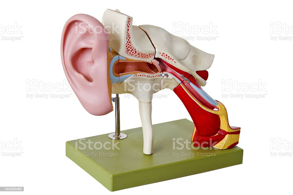 Auditory canal stock photo