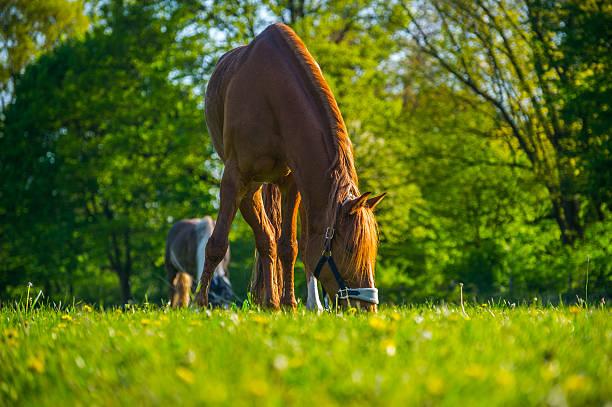 grasen Auf der meadow foxtail Uhr – Foto