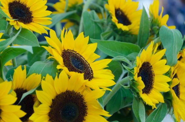August flower market in Redmond town center stock photo