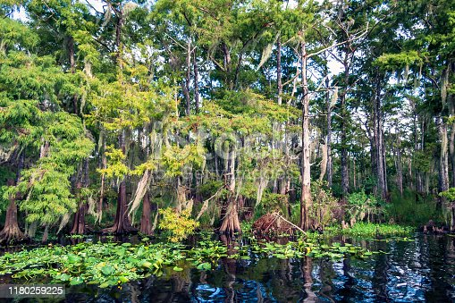 August on the St Johns River - the longet north flowing river in Florida - can be hot and humid but the views of nature (particularly the old cypress trees lining much of the shoreline) - and wildlife of all kinds are almost unsurpassed.