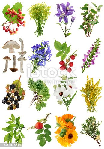 istock August  summer European  plants   and flowers set 1 . Isolated 1031923614