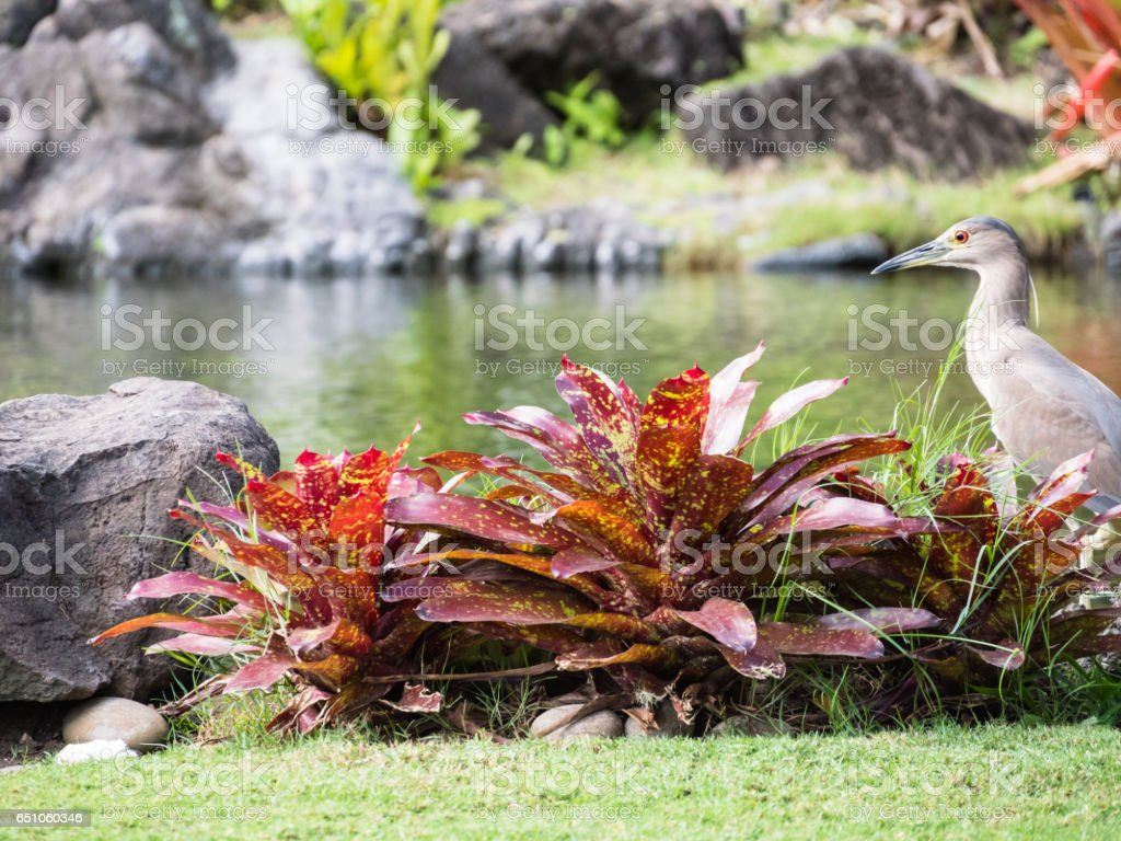 Aukuu in Waikiki, Honolulu City, Oahu Island, Hawaii, USA stock photo