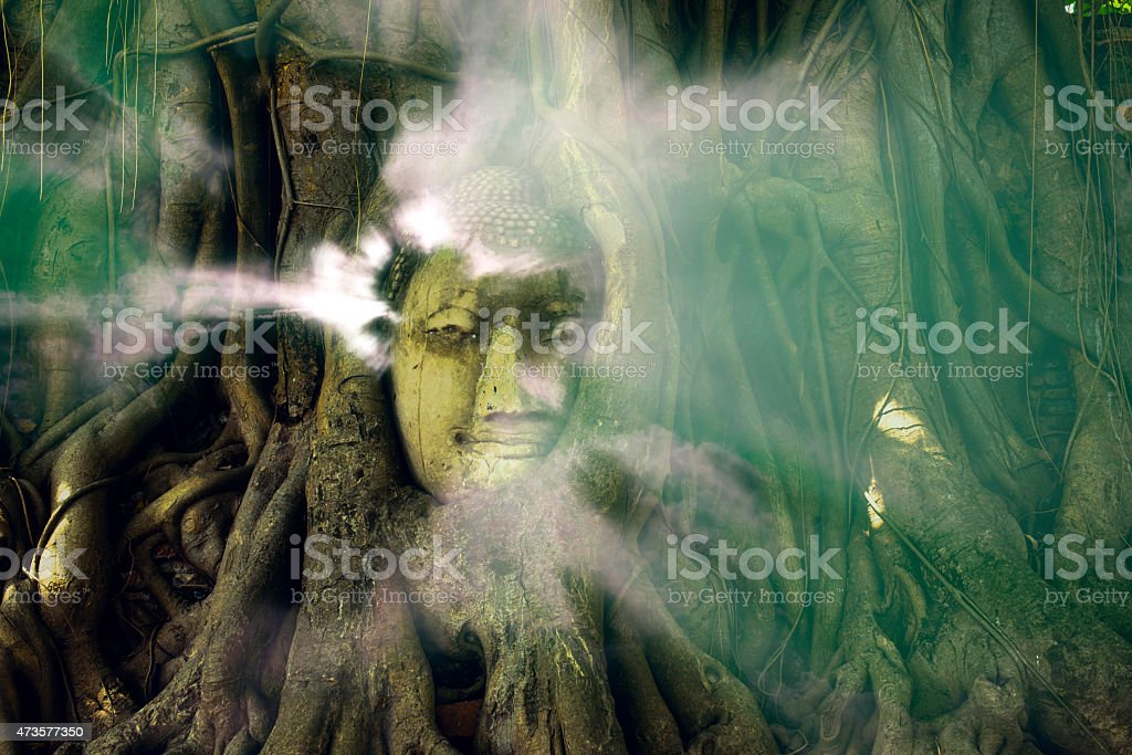 Aura lighting coming out from Buddha in the tree roots royalty-free stock photo