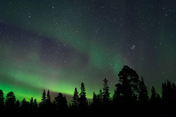 aurora borealis above boreal forest - pine forest sweden bildbanksfoton och bilder