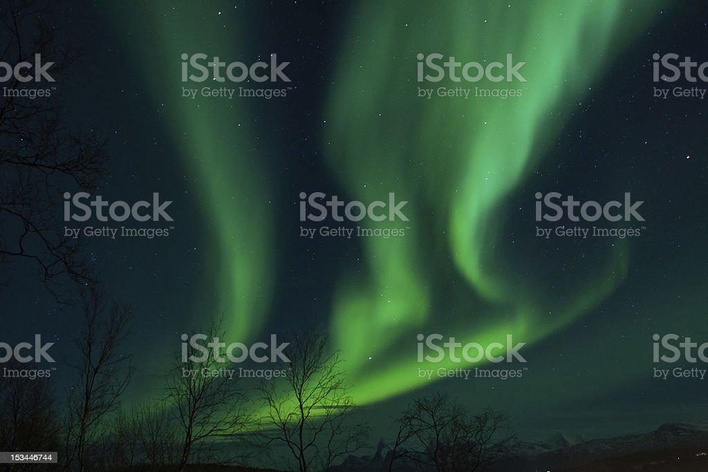 Aurora Borealis (Northern Lights) above trees royalty-free stock photo