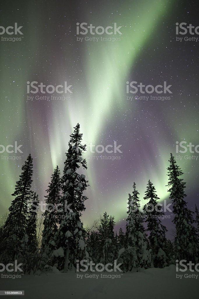 Aurora Borealis and Trees royalty-free stock photo