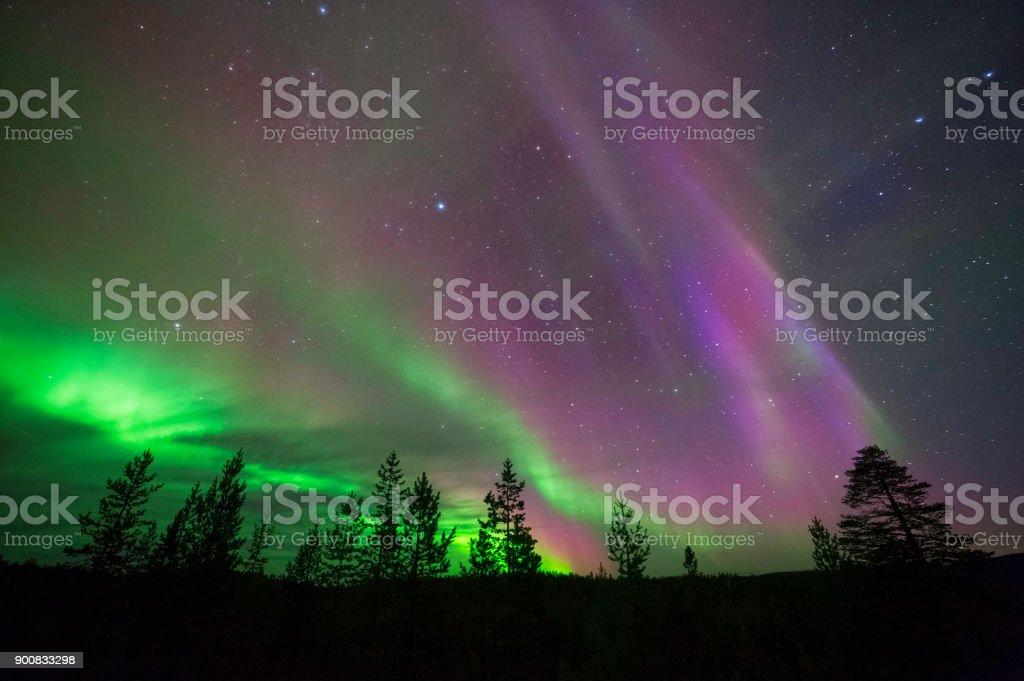 Norrsken, Northern Lights, ovanför boreala skogen - Royaltyfri Andlighet Bildbanksbilder