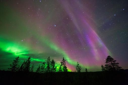 Norrsken Northern Lights Ovanför Boreala Skogen-foton och fler bilder på Andlighet