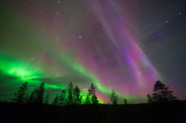 Aurora Borealis, Northern Lights, above boreal forest Aurora Borealis, Northern Lights, above boreal forest taiga stock pictures, royalty-free photos & images