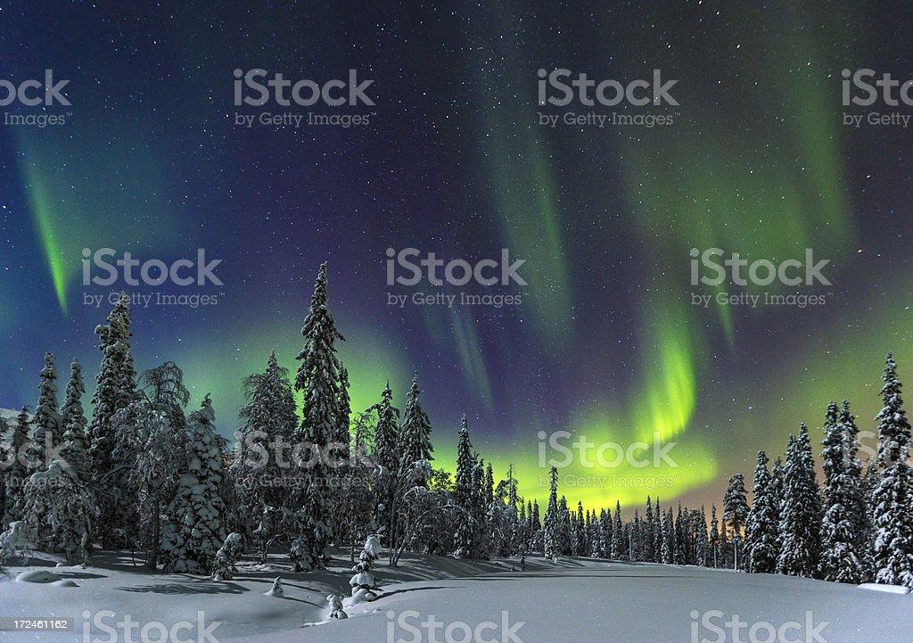 Aurora Borealis over pine trees and snow stock photo