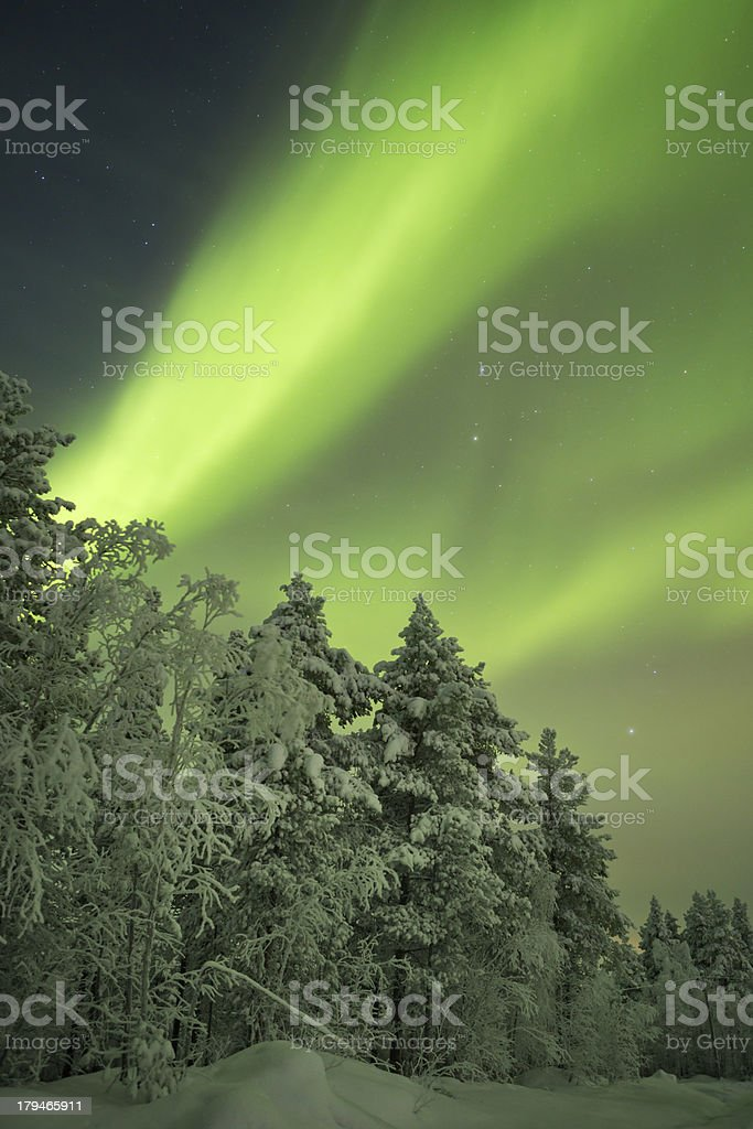 Aurora borealis over snowy trees in winter, Finnish Lapland royalty-free stock photo