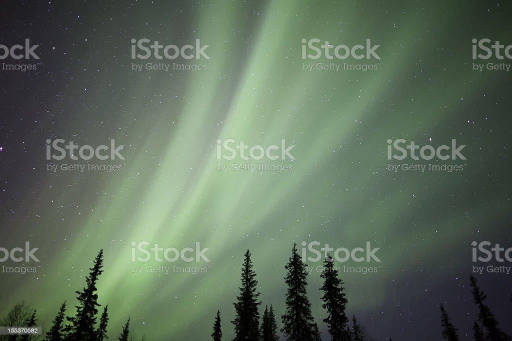Aurora Borealis over Trees royalty-free stock photo