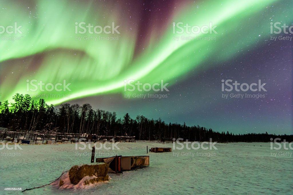 Aurora Over Dogsleds, Yellowknife stock photo