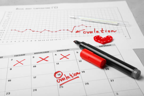 Auspicious and fertile day for conceiving child. Family planning. Ovulation cycle stock photo