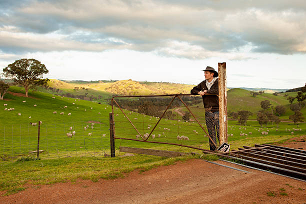 Aussie farmer looking out over a sheep paddock stock photo