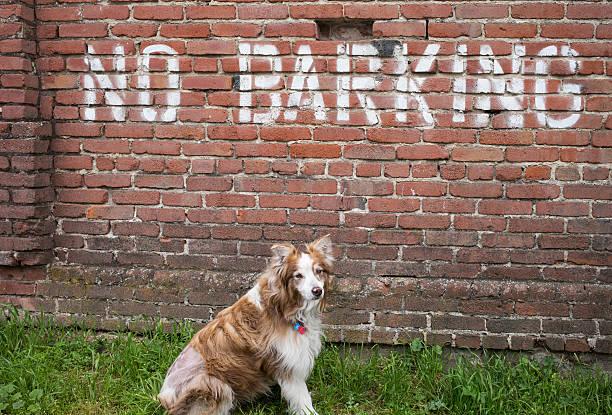 Berger australien par aucun panneau de barking - Photo