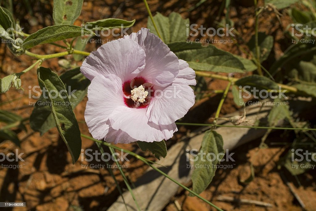 Australia Botany royalty-free stock photo