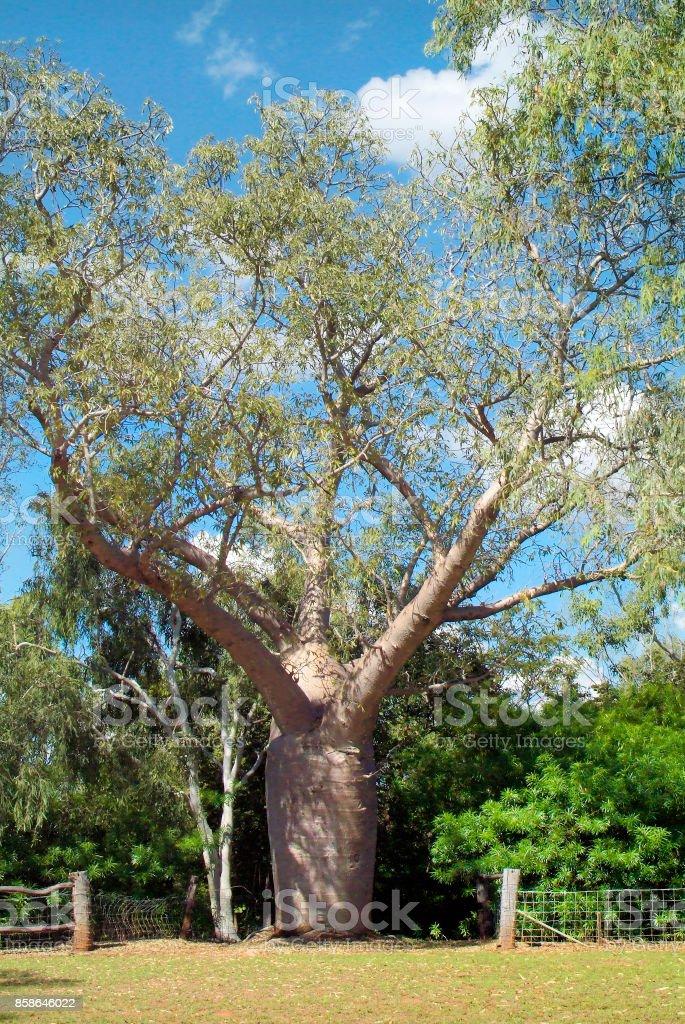 Australia, Botany stock photo