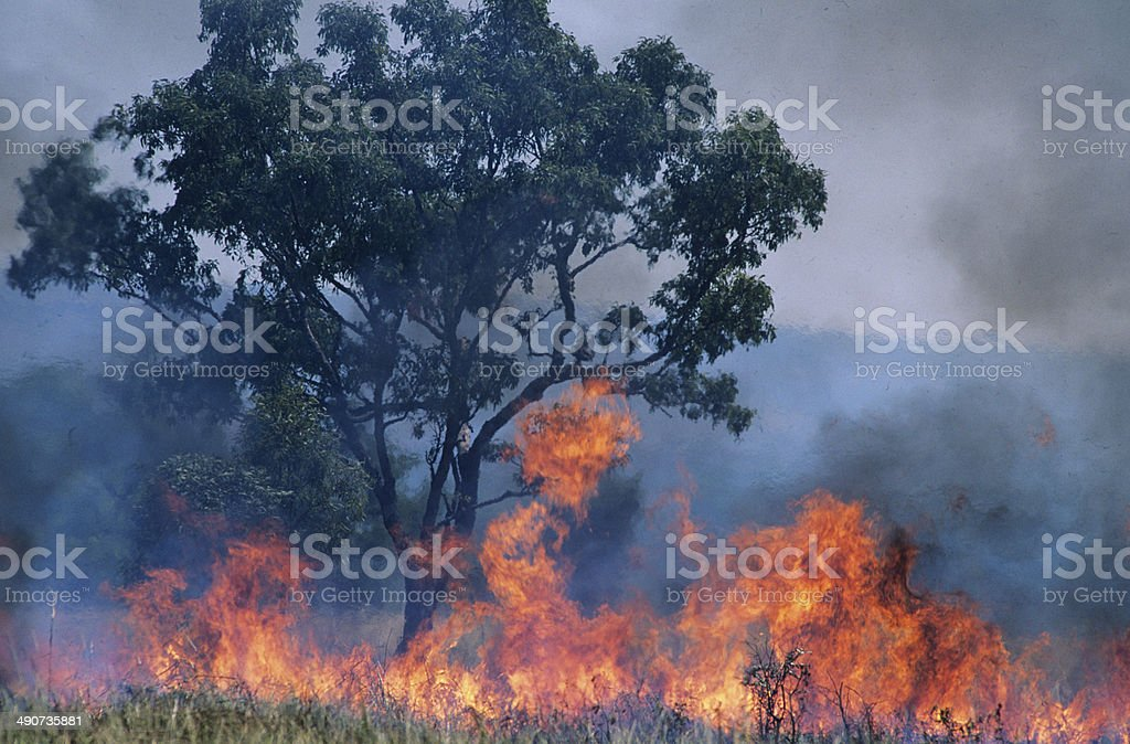 Australia Bush fire Australia Bush fire Australia Stock Photo