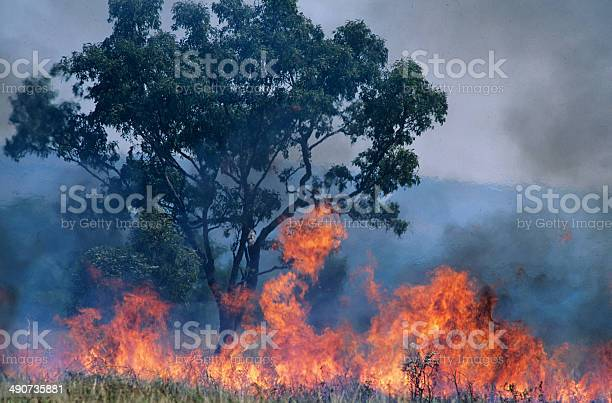 Australia Bush Fire Stock Photo - Download Image Now