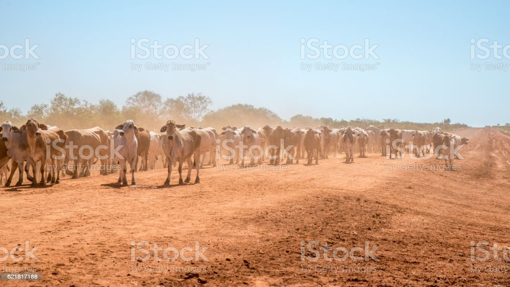 Australia Bush Outback farm stock photo