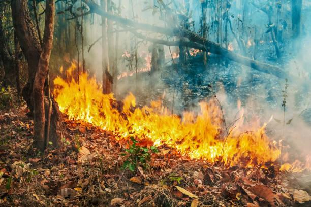 Australien Buschfeuer, Das Feuer wird durch Wind und Hitze angeheizt. – Foto