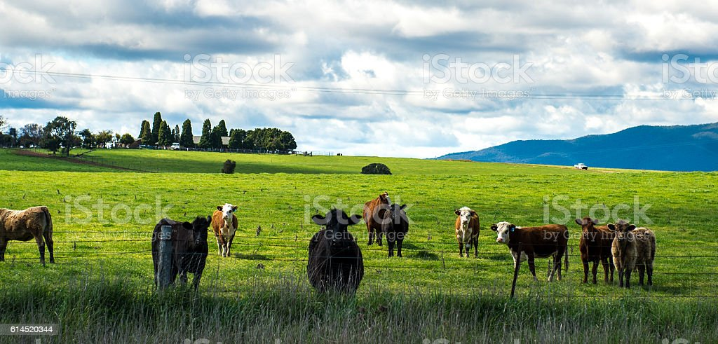 Australia countryside stock photo