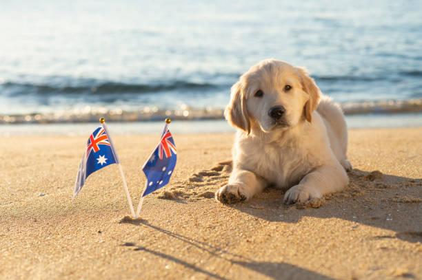 Australien Tag Hund – Foto