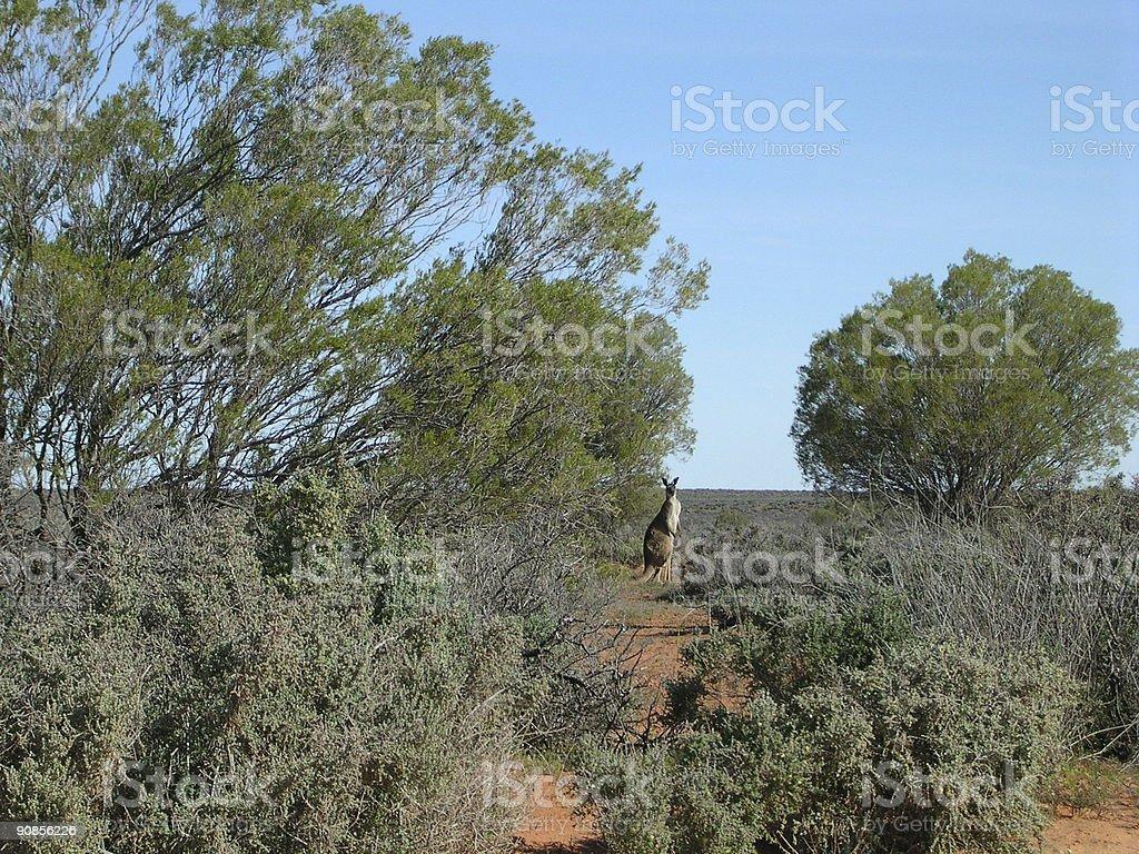 Australia! royalty-free stock photo