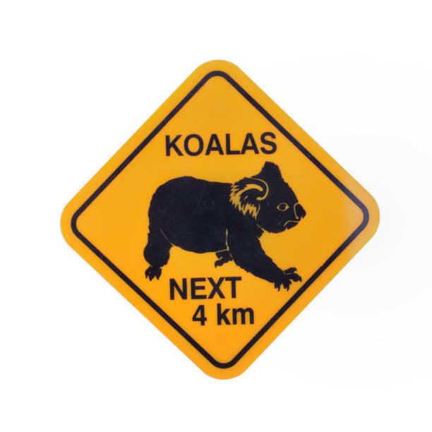 australia roadsign precaución koalas aislados sobre fondo blanco - foto de stock