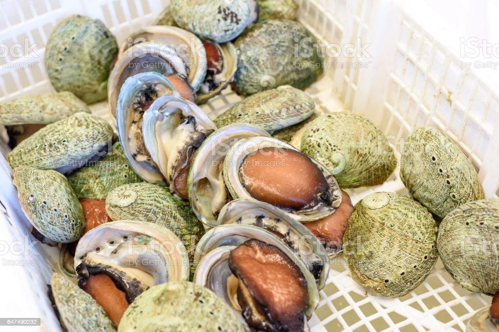 살아있는 전복을 판매 하는 호주 해산물 시장 스톡 사진