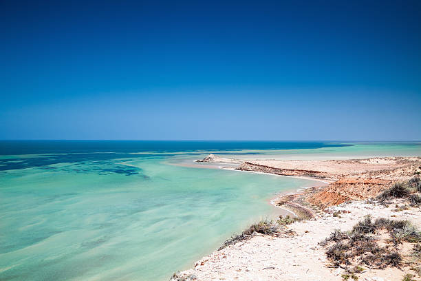 australia shark bay world heritage site - western australia stock pictures, royalty-free photos & images