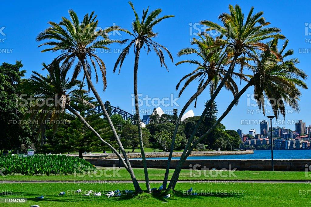 Australië, Sydney, Royal Botanic Garden, foto