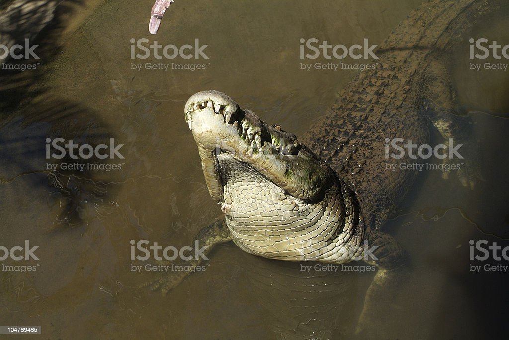 Australia Zoology stock photo
