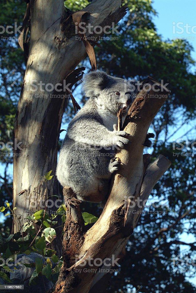 Australia Zoology stock photo