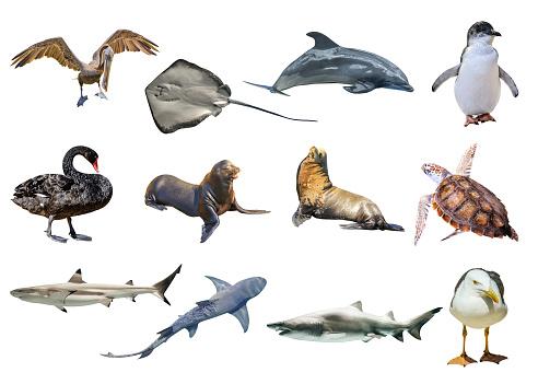 Australian animals collage