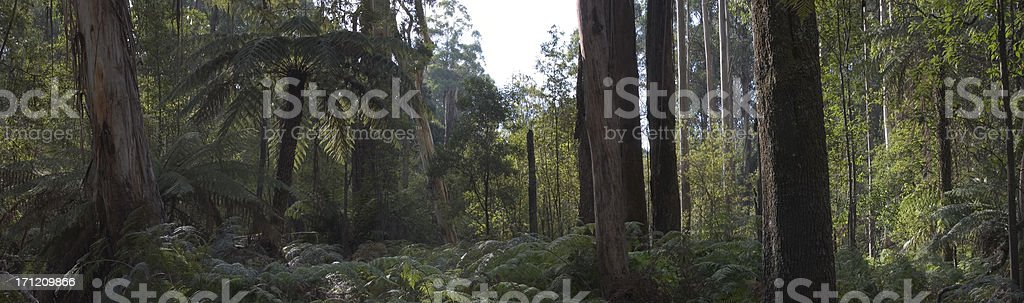 Australian Bush 02 royalty-free stock photo