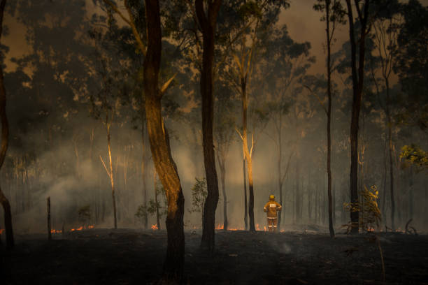 Australian Bush Fires - Loan Firefighter Observes Damage A loan australian Rural Firefighter observes the damage caused by bushfires in queensland Australia australia stock pictures, royalty-free photos & images