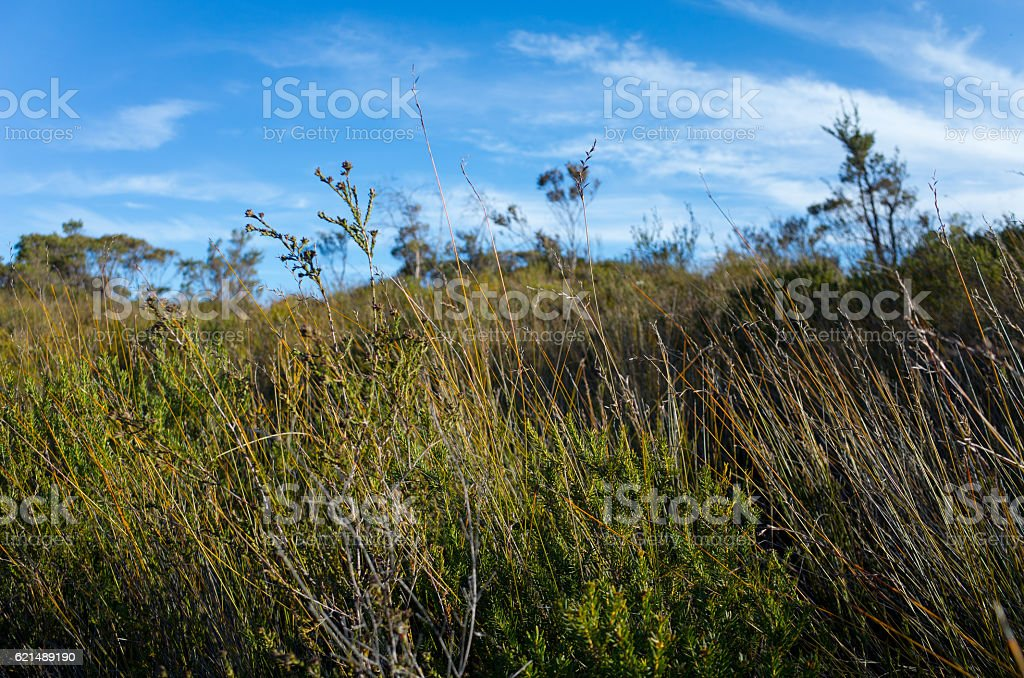Australian Bush Landscape With Native Shrubs foto stock royalty-free