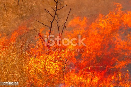 1195174769istockphoto Australian bushfire background 1073990102