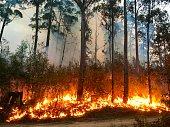 istock Australian Bushfire 1198540877