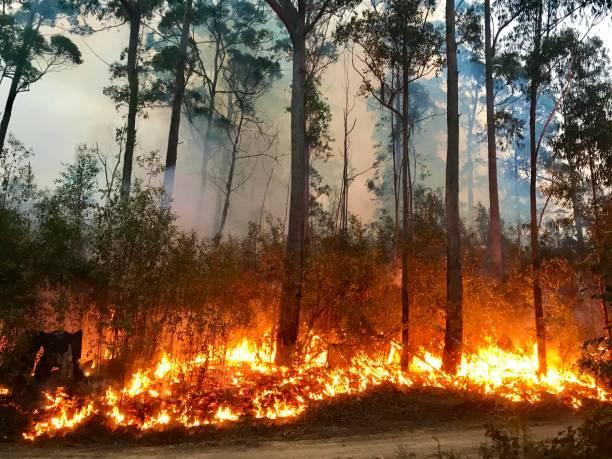 australian bushfire - incendio boschivo foto e immagini stock