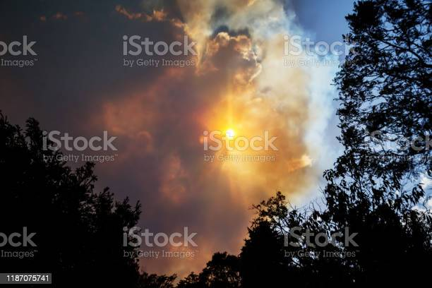 Photo of Australian bushfire: trees silhouettes and smoke from bushfires covers the sky and glowing sun barely seen through the smoke. Catastrophic fire danger, NSW, Australia