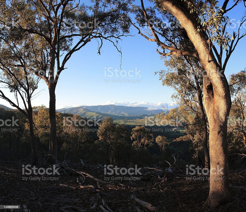 Australian Bushland scene stock photo